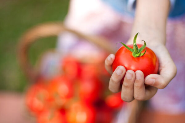 Frau Tomaten