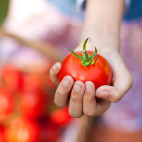 Die größte Tomatenschlacht des Jahres: 3 Tage Partyurlaub mit unlimited Bier & Sangria, Frühstück & Ticket fürs La Tomatina nur 142€