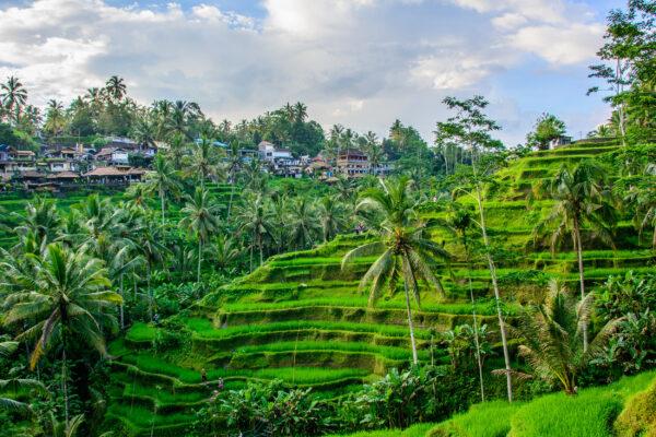 Indonesien Bali Ubud Taggallalang Terrasse