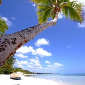 Karibik Dom Rep Palme