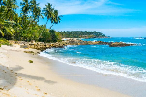 Sri Lanka Palmen Strand