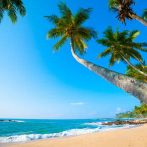 Abenteuer Sri Lanka: 14 Tage mit Unterkunft, Flug & Gepäck nur 481€