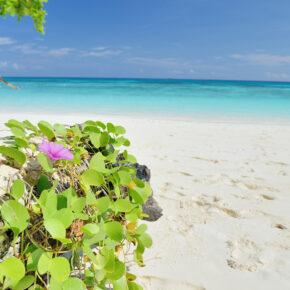 Khao Lak Cluburlaub am Strand: 8 Tage Thailand mit Vollpension, Flug, Transfer, Zug & Extras für 1.223€