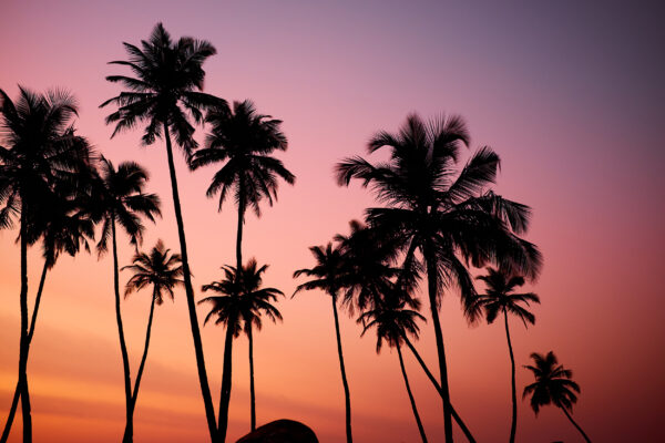 USA Florida Miami Palmen