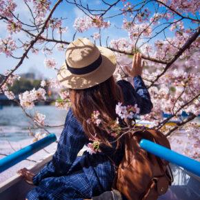 Kirschblüte in Japan: Die schönsten Orte & Feste