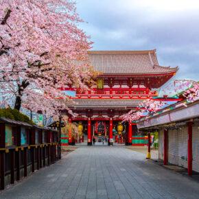Kirschblütenzeit in Japan: Hin- & Rückflüge nach Tokio nur 430€