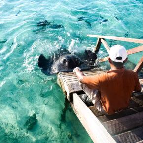 Malediven Mantarochen