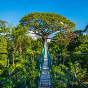 Peru Amazonas Brücke