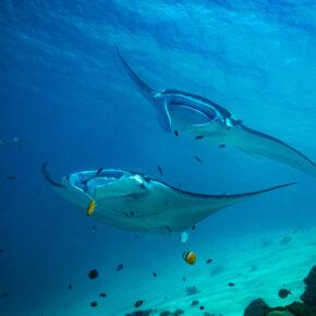 Tauchen auf Bali: Die Top 6 Divespots auf der indonesischen Insel