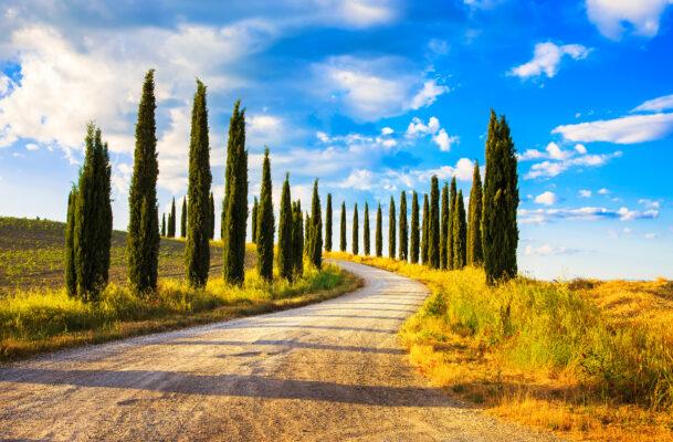 Italien Toskana Siena Zypressen