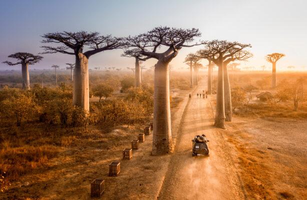 Madagaskar Baobad Bäume