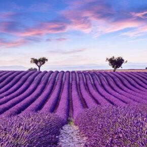 Langes Wochenende in der Provence: Frankreich zur Lavendelblüte im eigenen Studio nur 43€