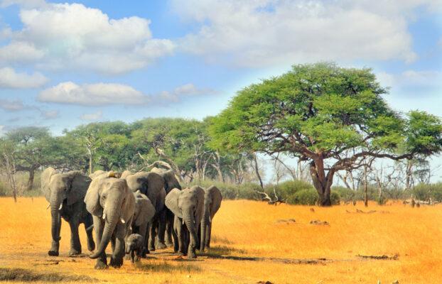 Simbabwe Elefanten