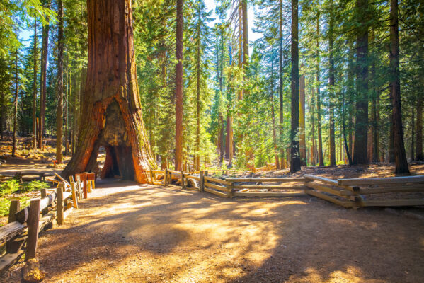 USA Yosemite Nationalpark
