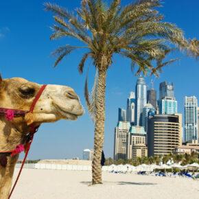 Wüstensafari in Dubai: 7 Tage im TOP 4* Hotel inkl. HP, Flug, Transfer & Zug nur 599€