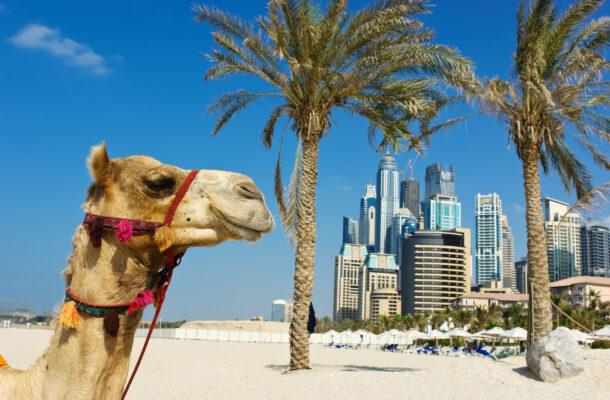 VAE Dubai Kamel