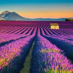 Zur Lavendelblüte in die Provence: 4 Tage langes Wochenende mit Unterkunft nur 36€