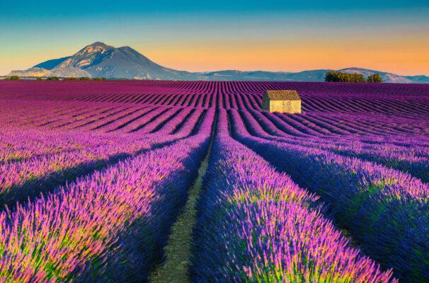 Frankreich Provence Lavendel Berge