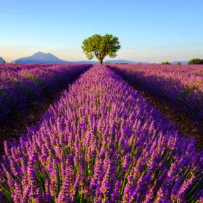 Langes Wochenende: 4 Tage Frankreich zur Lavendelblüte im 3* Hotel für 84€