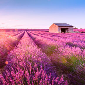 Wochenende in der Provence: 2 Tage zur Lavendelblüte im 4* Hotel mit Frühstück ab 64€