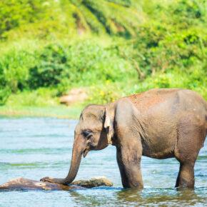 Elefantenreiten im Urlaub: Einmaliges Erlebnis oder absolutes Tabu?