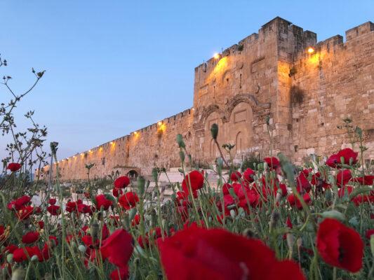 Israel Jerusalem Blumen