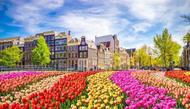 Niederlande Amsterdam Blumen bunt