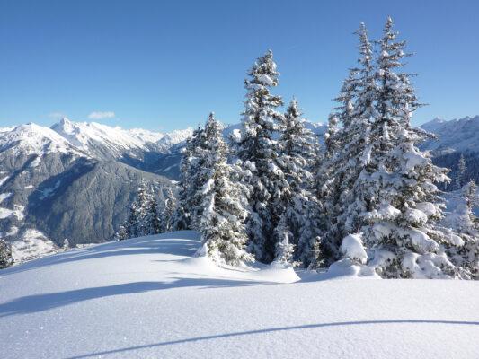 Oesterreich Tirol Schnee Baeume