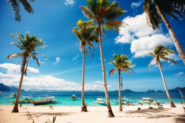 Palawan Tipps: Strand Palmen