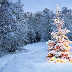 Weihnachten in Schweden: Diese Bräuche & Traditionen gehören zum schwedischen Fest
