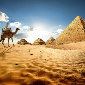 Ägypten Kamel Pyramiden Wüste