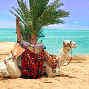 Ägypten: 14 Tage in Sharm el Sheikh im 3* Hotel mit All Inclusive, Flug & Transfer nur 414€