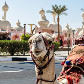 Auf nach Ägypten: 7 Tage All Inclusive im TOP 5* Hotel inkl. Flug, Transfer & Zug für 767€