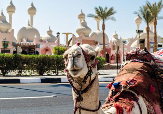 Ägypten Sharm el Sheikh Kamel