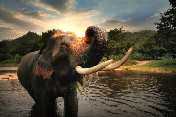 Elefanten reiten