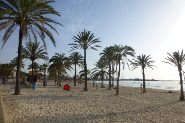 Mallorca El Arenal Strand Palme