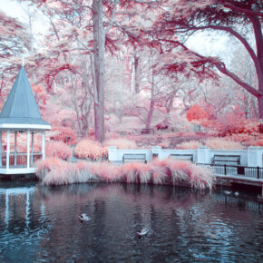 Neuseeland Wellington Botanischer Garten