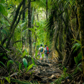 Die TOP 7 Nationalparks in Costa Rica: Vulkane, Regenwälder & Faultiere