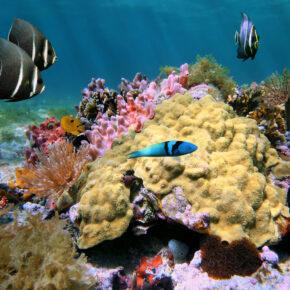 Tauchen in Costa Rica: Die schönsten Spots um die Unterwasserwelt zu erkunden