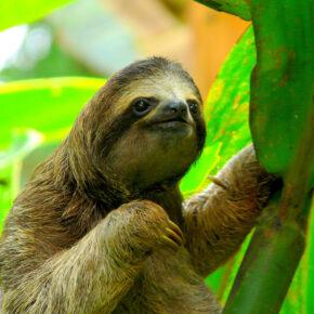 Urlaub in Costa Rica: Die Highlights des Landes auf einen Blick