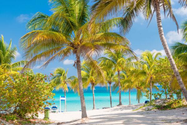 Cuba Varadero Kokosnuss Palmen
