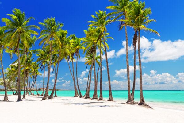 Dom Rep Punta Cana Kokosnuss Palmen