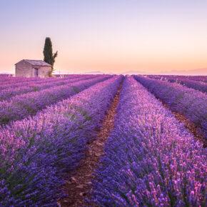 Frühling in der Provence: Flüge nach Marseille nur 8€