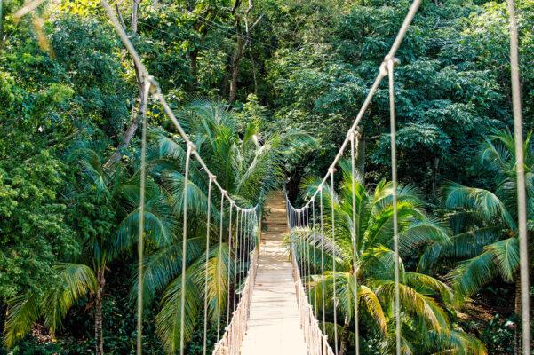 Honduras Dschungel Brücke