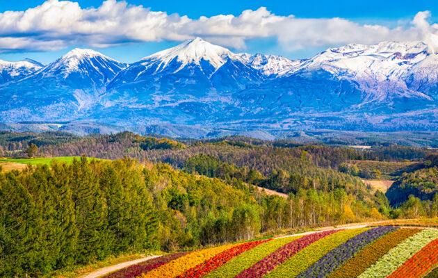 Japan Reisetipps Hokkaido Blumenfeld