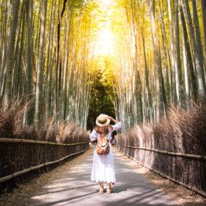 Japan Kyoto Wald Frau