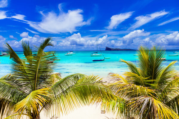 Mauritius Palmen Strand Boot