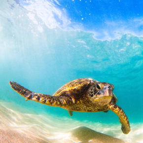 Nicaragua Schildkröten