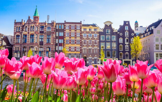 Niederlande Amsterdam Tulpen