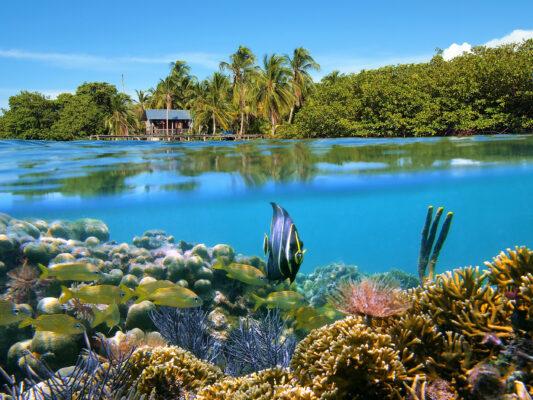 Panama Bocas del Toro Korallen